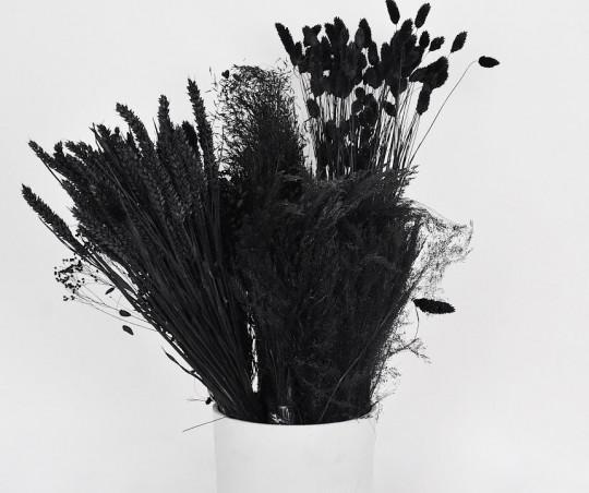 evighedsblomster tørrede blomster tørret blomster sort